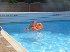 2017 05 29 rencontre piscine 067
