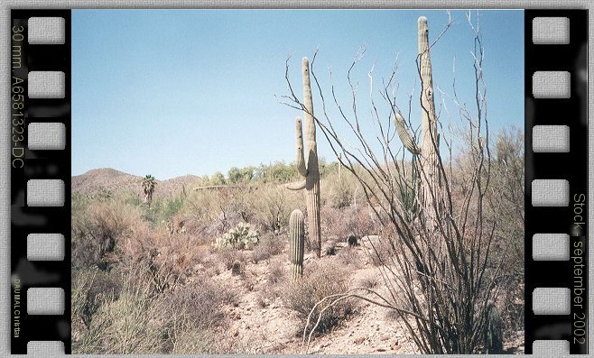 Saguaro National park country